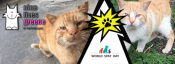 World Spay Day - Sponsor A Cat Today