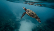 Saving A Sea Turtle In Crete